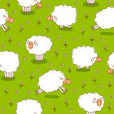 White Sheep Grazing On a Green Meadow Royalty Free Stock Photo