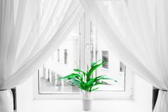 White sheer curtain texture background in daylight atmosphere of apartment`s interior and green flower in flowerpot on the window. Sill. Black and white stock photos