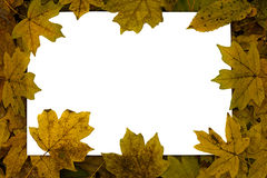 White sheet on a background of autumn leaves Royalty Free Stock Photography