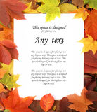 A white sheet of paper on an autumn frame Royalty Free Stock Images
