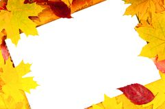 White sheet of paper and autumn leaves. White sheet of paper and dry autumn leaves of the trees Royalty Free Stock Photography