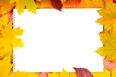 White sheet of paper and autumn leaves Stock Photos