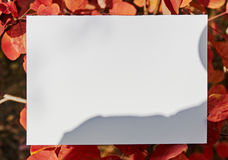 White sheet of paper among autumn leaves Royalty Free Stock Image