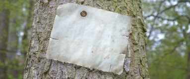 White sheet of paper on the tree royalty free stock photos