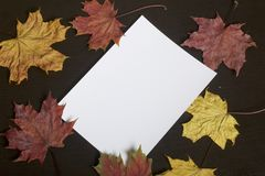 A white sheet of photographic paper on a dark background among the withered autumn leaves of yellow, red and green. A white sheet of photographic paper on a Stock Image