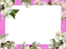 White sheet on a purple background and white flowers. stock image