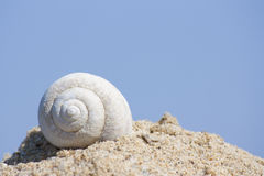 White shell. Shell on a sand dune with blue sky background Stock Image