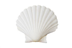 White shell Royalty Free Stock Images