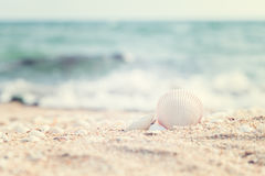 White Shell on the beach Stock Image
