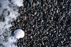 A white shell on a black pebble beach with waves royalty free stock images