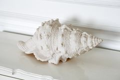 White shell on a white chest as a decoration stock photography