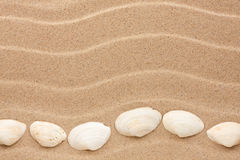 White shell lie on the sand Royalty Free Stock Image