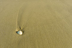 White Shell on the sand Royalty Free Stock Photos