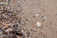 White shell in the sand Royalty Free Stock Images