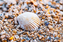 White shell on a shore Royalty Free Stock Photo