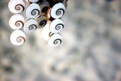 White shells Royalty Free Stock Image
