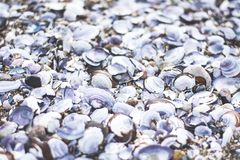 White Shells Royalty Free Stock Image