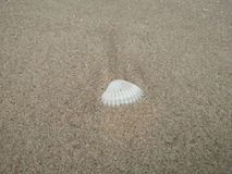 White shells are on the beach. stock photo
