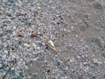 White shells. On the beach at dawn Royalty Free Stock Photography