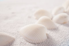 White shells close up on white. Sand Royalty Free Stock Photos