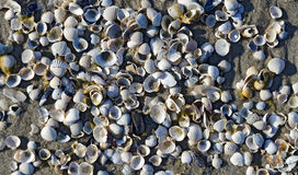 White shells on sand Stock Images