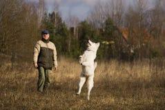 White Shepherd With Master Stock Photo