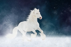 White Shire horse stallion runs gallop over star sky background Stock Photo