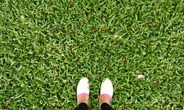 White shoes on green grass Royalty Free Stock Photos
