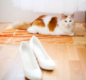 White shoes, wedding dress and cat Stock Photos