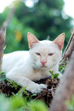 White cat. White short hair cat in evening light royalty free stock image
