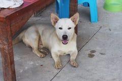 White short legs street dog Stock Photo