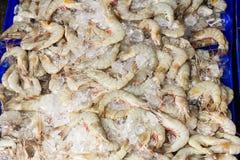 White shrimps Stock Photography