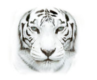 White siberian tiger face closeup Royalty Free Stock Images
