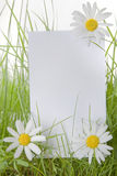 White Sign Amongst Grass and Daisy Flowers Royalty Free Stock Photos