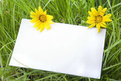 White Sign Amongst Grass and Daisy Flowers Royalty Free Stock Image