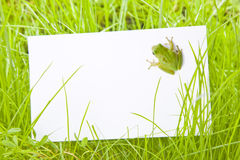 White Sign Amongst Grass with Tree Frog Stock Photos