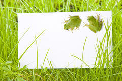 White Sign Amongst Grass with Tree Frogs Royalty Free Stock Photos