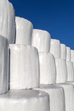 White silage bales Stock Images