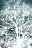 White silhouetted tree Royalty Free Stock Image