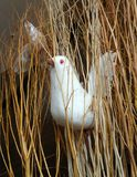 White Silk cocoon bird in dry brown sticks Stock Photos