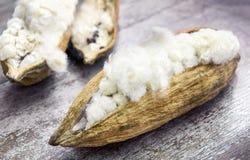 White silk cotton Royalty Free Stock Images