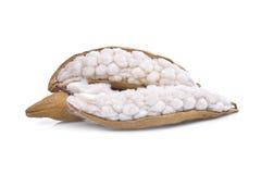 White silk cottonBombax ceiba isolated on white. Background Stock Image