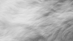White silk feathers background. Wool, white rabbit skin stock images
