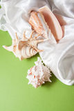 White silk with shells. Curvy white silk drapery on dark background Royalty Free Stock Images