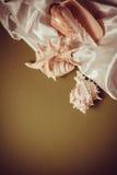 White silk with shells. Curvy white silk drapery on dark background Royalty Free Stock Photos