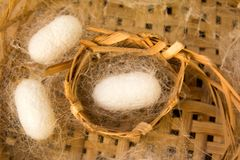 White silkworm in cocoon stage on weave craft. Background stock photos