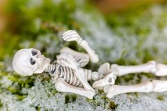 White skeleton dead body bone rests on moss with snow during win. Ter time, soft focus blurred background Royalty Free Stock Images