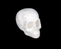White skull on a black Royalty Free Stock Photos