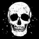 White skull Stock Photography