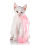 White small cat with a pink tape Royalty Free Stock Photos